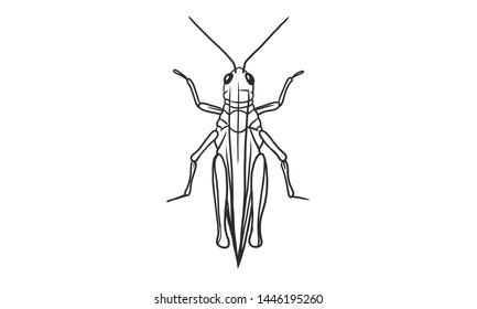 Vector lineart illustration of grasshopper on white background, hand drawn top view grasshopper insect sketch