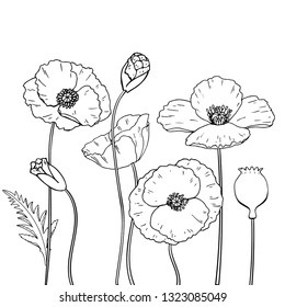 Vector lineart poppy set with flower bud and stew. Isolated. Hand drawn graphic illustration.