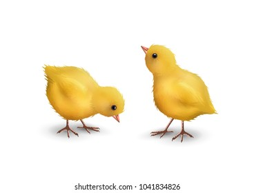 Vector little realistic chicks isolated on white background