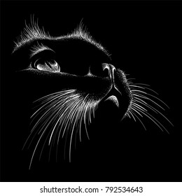 The Vector logo cat for T-shirt design or outwear.  Tattoo cats style background.