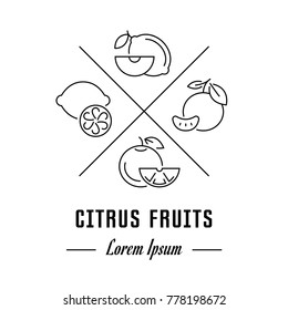 Vector logo citrus fruits. Hipster emblem, label or banner for citrus fruits. Line sign with elements. Concept brand.