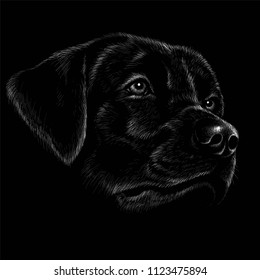 The Vector logo dog for T-shirt design or outwear.  Hunting style dog background.