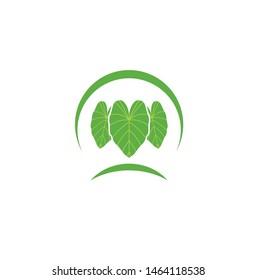 vector logo graphic taro leaf tropical green nature