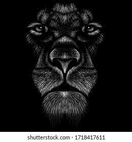 The Vector logo lion for tattoo or T-shirt print design or outwear.  Hunting style lions background. This hand drawing would be nice to make on the black fabric or canvas.