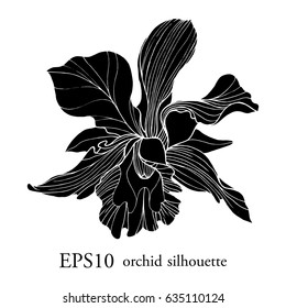 vector logo with silhouette orchid on white background. shadow of beautiful flower.