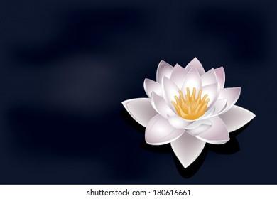 vector lotus flower