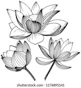Fleur De Lotus Images Photos Et Images Vectorielles De Stock