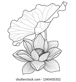 Vector lotus flower.Lotus seed pods. Isolated illustration element. Full name of the plant