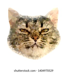 Vector low poly animal art. Polygonal portrait of arrogant cat face isolated on the white background.