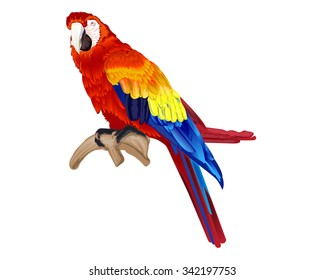 Vector of macaw bird isolated on white