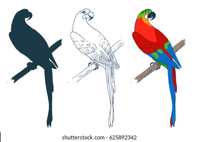 Vector macaw parrot illustration. Animal in the wild hand drawn sketch with beautiful colorful exotic bird sitting on branch in jungles. Set with colored, silhouette, outlines