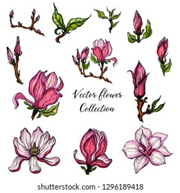 Vector Magnolia flower collection