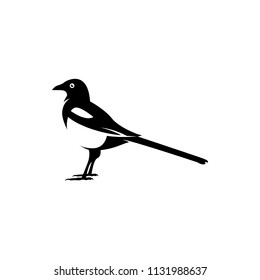 vector magpie silhouette
