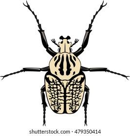 Vector male specimen of Goliathus albosignatus beetle