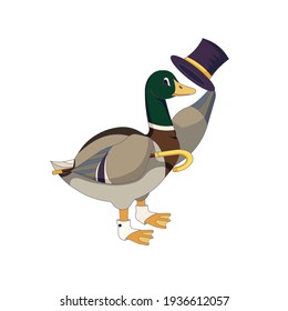 Vector mallard with top hat and socks in Cartoon style, wild duck gentleman with topper and cane on isolated white background for prints, stickers, patterns, icons for social media, websites and apps.