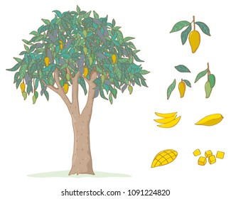 Vector mango tree on white background. Fruit slice and whole Isolated set.