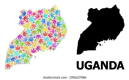 Vector marijuana mosaic and solid map of Uganda. Map of Uganda vector mosaic for marijuana legalize campaign. Map of Uganda is composed with bright marijuana leaves.