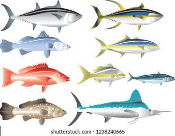 Vector - Marine Fish, Tuna, Snapper, Mackerel, Grouper, Marlin, Barramundi And Amberjack