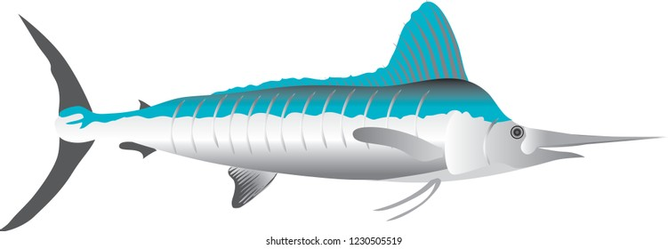 Vector - Marlin, Marine Fish