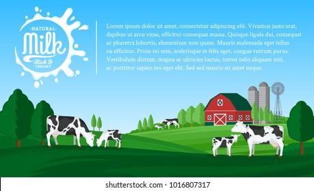 Vector milk illustration. Summer rural landscape with cows, calves and farm.