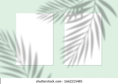 Vector mock up of white blank vertical paper. Shadow overlay effect. Transparent soft light and shadows from branches, plant and leaves. Mockup of transparent leaf shadow and natural lightning.