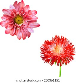 Vector Mona Lisa flower, Pink flower, Red Thistle flower, aster flower, Spring flower.Isolated on white background.