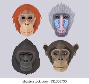 Vector monkeys set chimpanzee orangutan gorilla mandrill new year of monkey