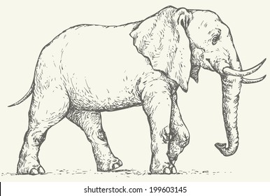 Vector monochrome drawing of a shading ink on paper. Big elephant walks through the wilderness