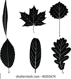 Vector monochrome foliage on white background