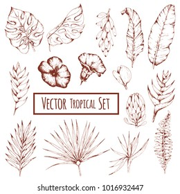 vector monochrome set of tropical leaves and flowers