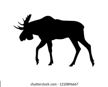 Vector moose silhouette isolated on white. Black shape of moose.