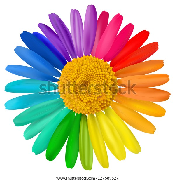 Vector multicolored daisy, chamomile flower isolated
