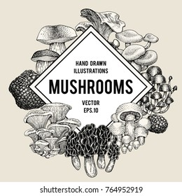 Vector mushroom illustrations. Hand drawn set of different fungus kinds. Vector banner or logo template. Retro illustration.
