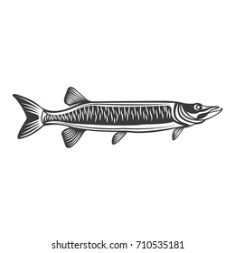 Vector Of Muskie Fish In Black And White
