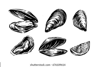 Vector mussel set hand drawn illustration on white