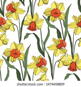 Vector Narcissus floral botanical flower Yellow and green engraved ink art