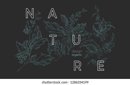 Vector nature template Botanical art sketch design Coffee tree with realistic leaf, flower, bean, grain Elegant green background Organic vintage card, retro bouquet Herbal hand drawn bio illustration
