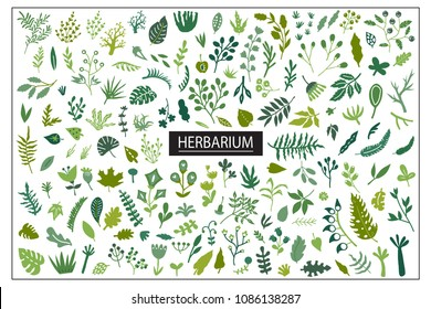 Vector nautical seamless background pattern with hand drawn beautiful leaves, plants, flowers
