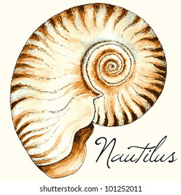Vector nautilus sea shell design. Hand drawn watercolor and ink illustration in traditional style