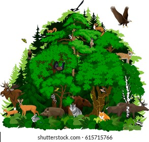 vector north woodland forest with animals