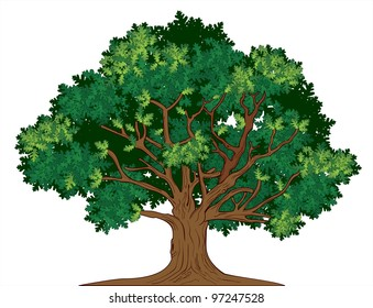 Vector oak tree