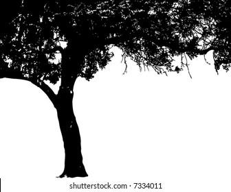 Vector of an oak tree silhouette
