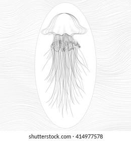 Vector  oceanic jellyfish