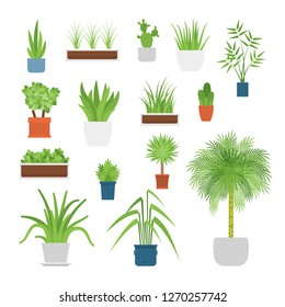 Vector office and house interior plants in pots set