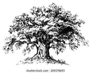 Vector old tree. Isolated black silhouette on white background