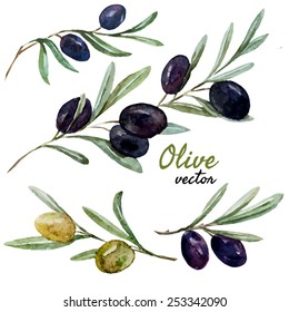 vector, olive, watercolor, set meal