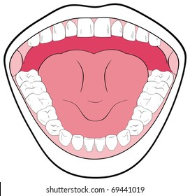 Vector Opened Mouth Showing the Teeth Tongue Tonsils Can be useful in Schools Clinics - You can write Types of Teeth parts of Mouth Simple Attractive