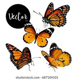 Vector Orange Butterflies Illustration Set