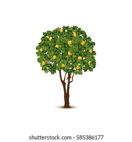Vector orange tree on white background