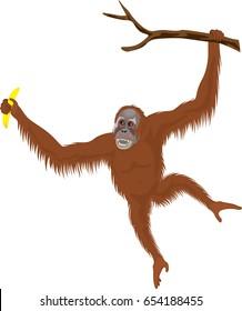 vector orangutan